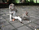 Monkey Forest Sanctuary - Bali Indonesia (20)